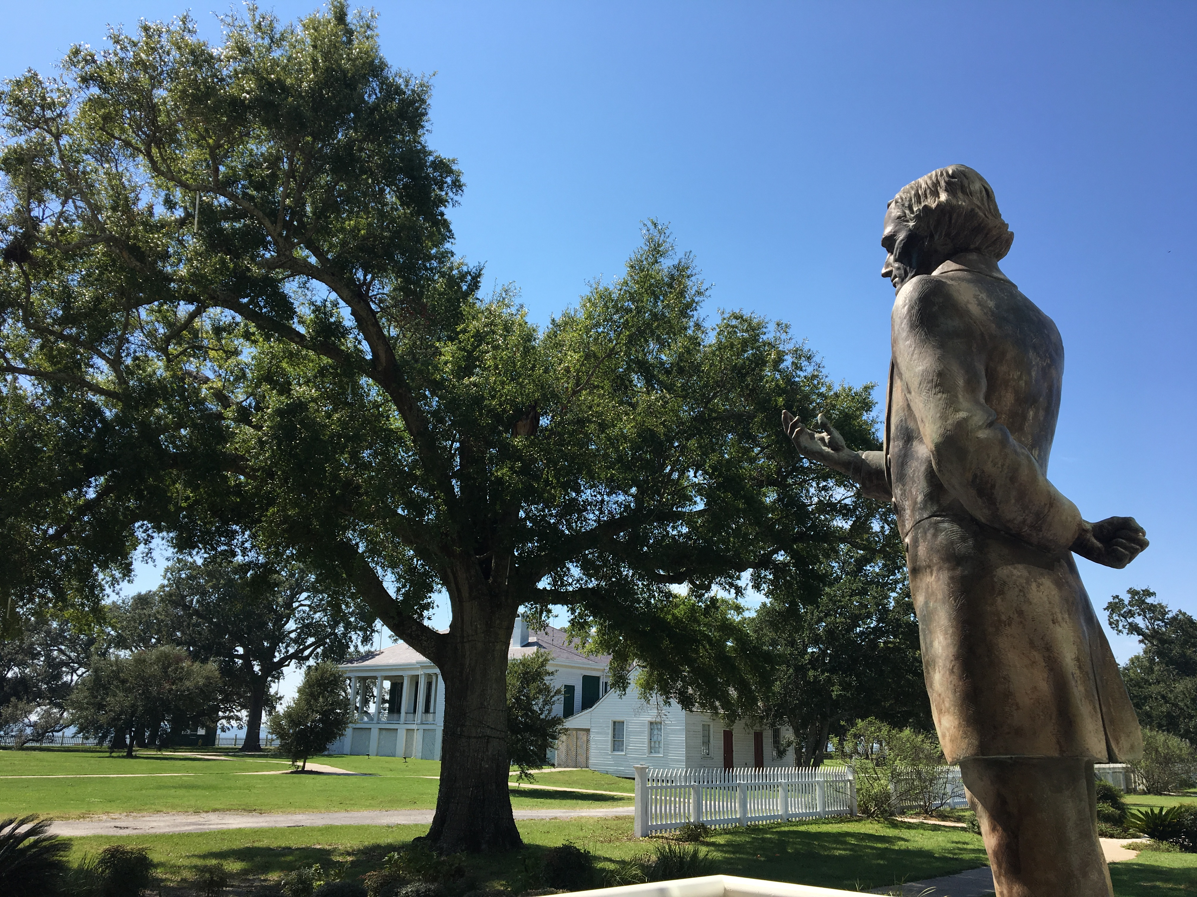 Face of jesus can be seen on gulfport tree