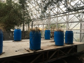 science project on grasses growing with trees in savannah