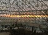 sunset behind desert ecosystem