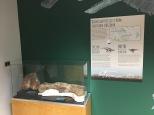 Dinosaur bones found in AZ