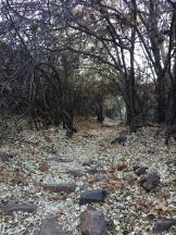 woods on nike