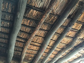 700 year old preserved ceiling made of reed (from river below), ribs from dead saguaros and walnut logs.