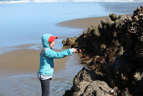 surveying Sea Stars